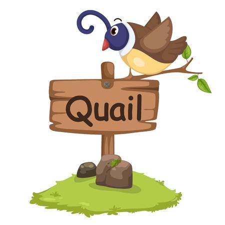 animales alfabeto letra Q para la ilustración vectorial de codorniz