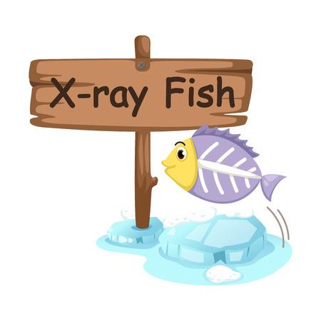 animal alphabet letter X for x-ray fish illustration vector Vector
