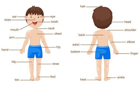 illustratie van de woordenschat deel van het lichaam vector Stock Illustratie