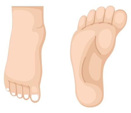 human leg: illustration of foot vector