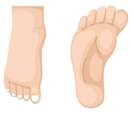 illustration of foot vector
