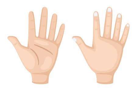 illustration of hand vector