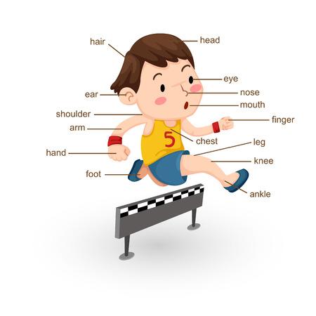 ojo humano: ilustraci�n de parte del vocabulario de vector cuerpo Vectores