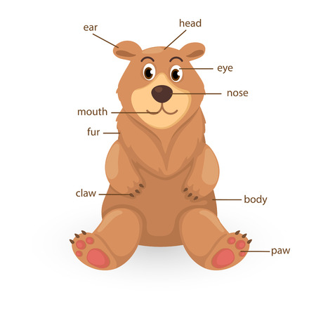 big toe: illustration of bear vocabulary part of body vector