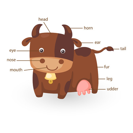big toe: illustration of cow vocabulary part of body vector