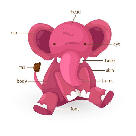 big toe: illustration of elephant vocabulary part of body vector