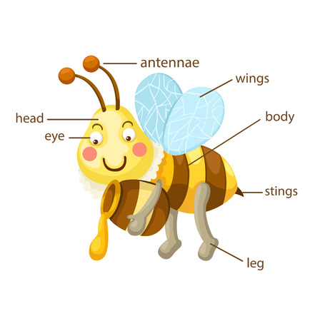 body language: illustration of bee vocabulary part of body vector