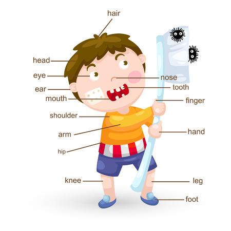 illustration of vocabulary part of body vector Vector Illustration