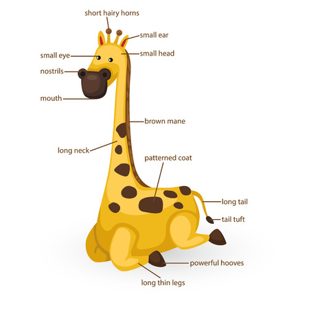 big toe: illustration of giraffe vocabulary part of body vector Illustration