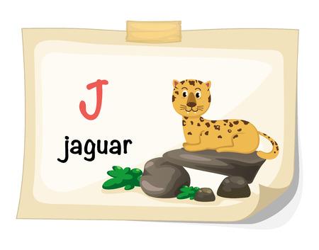 jaguar: Illustration of animal alphabet letter J for jaguar illustration vector