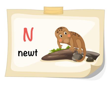 newt: Illustration of animal alphabet letter N for newt illustration vector