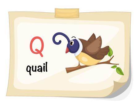 quail: Illustration of animal alphabet letter Q for quail illustration vector