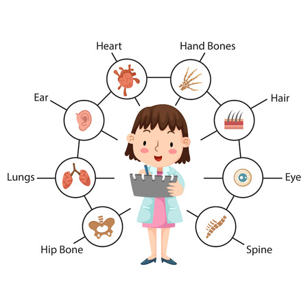 The idea of the doctor performing physical examination illustration, vector with vocabulary Vector