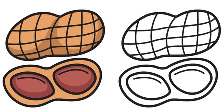 filberts: Illustration of isolated colorful and black and white nut for coloring book Illustration