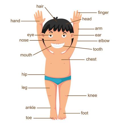 illustration of vocabulary part of body