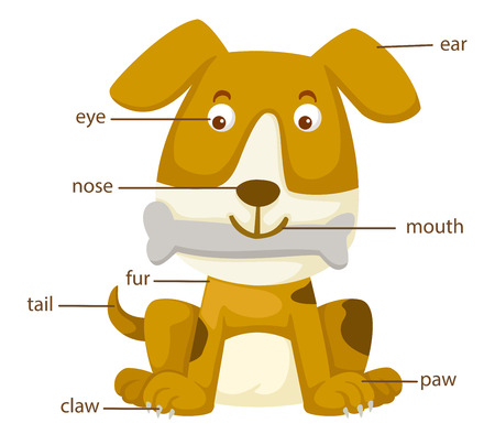 illustration of dog vocabulary part of body  Vector
