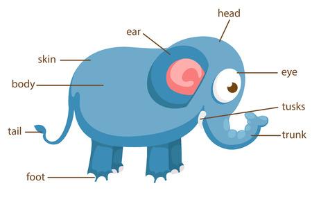body skin: illustration of elephant vocabulary part of body