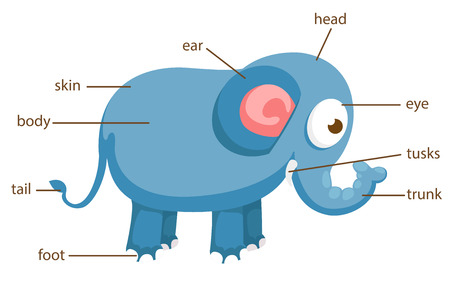 illustration of elephant vocabulary part of body
