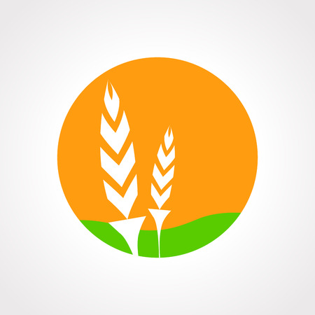 oat field: Illustration of isolated wheat icon vector