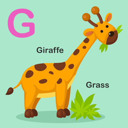 lettres alphabet: Illustration Isolated Animal Alphabet Lettre G-Herbe, Giraffe.Vector Illustration