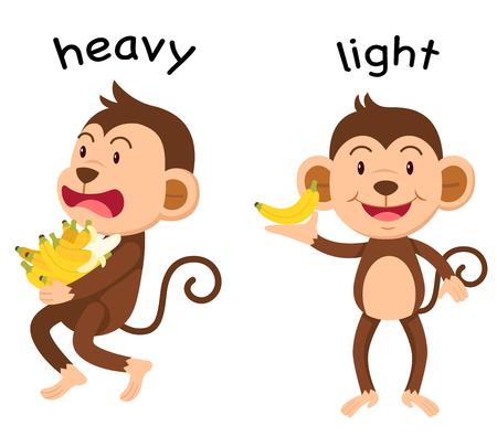Opposite words heavy and light illustration