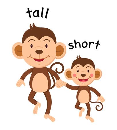 Opposite words tall and short illustration