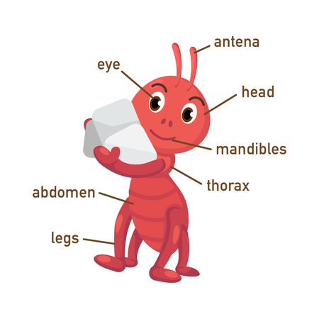 foreleg: Illustration of ant vocabulary part of body vector