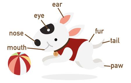 dog sled: Illustration of dog vocabulary part of body vector Illustration