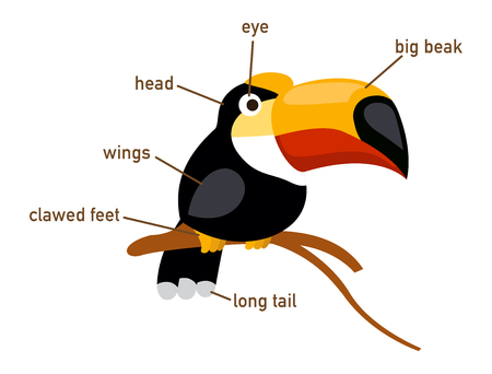 vocabulary: Illustration of hornbill vocabulary part of body vector