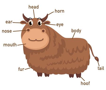 himalayas: Illustration of yak vocabulary part of body vector