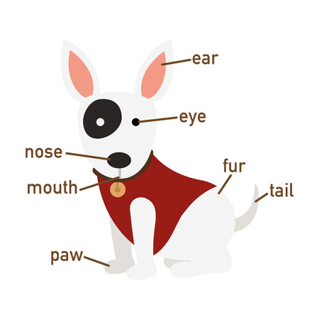 vocabulary: Illustration of dog vocabulary part of body vector Illustration