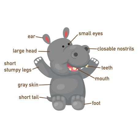 big toe: Illustration of hippo vocabulary part of body vector Illustration