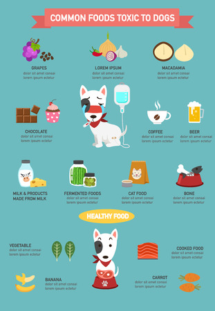 food poison: Common foods toxic to dogs infographic.vector illustration
