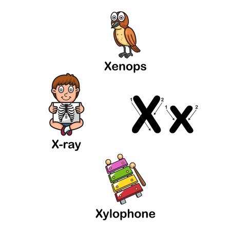 xilofono: La letra del alfabeto X-xenops, rayos X, ilustración del vector xilófono