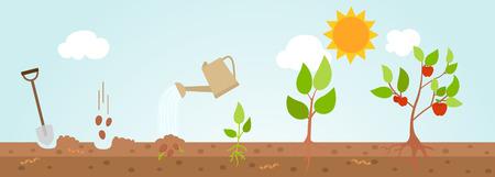 Tree growth diagram.vector illustration.