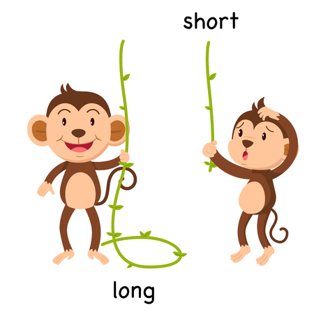 Tegenover lange en korte vectorillustratie