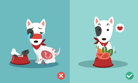 Right and wrong ways to feed dogs.
