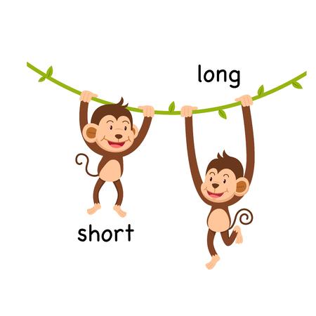 Opposite short and long vector illustration Banco de Imagens - 95377393