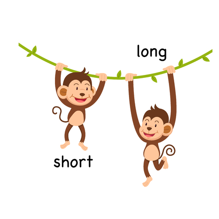 Opposite short and long vector illustration