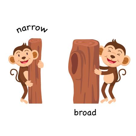 Opposite narrow and broad vector illustration Vector Illustration