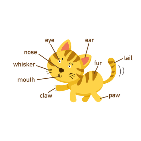 Illustration of cat vocabulary part of body.vector Illustration