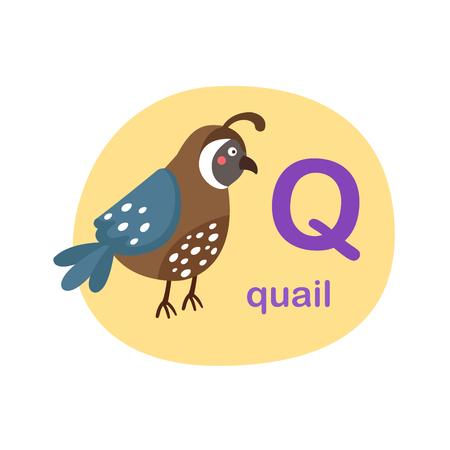 Illustration isolated alphabet letter q-quail vector illustration Ilustração
