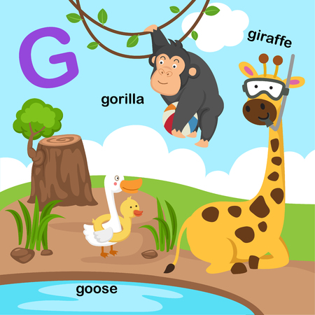 Illustration Isolated Alphabet Letter G-giraffe,goose,gorilla.vector