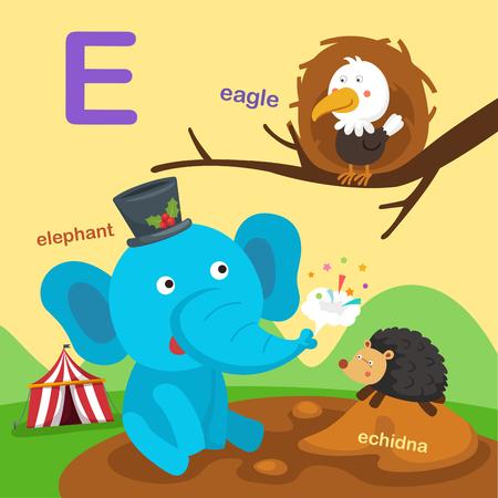 Illustration Isolated Alphabet Letter E-eagle,echidna,elephant.vector