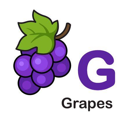 Alphabet Letter G-Grapes vector illustration