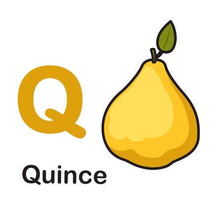 Alphabet Letter Q-Quince vector illustration
