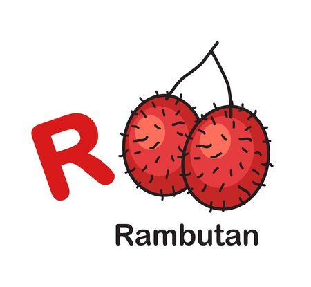 Alphabet Letter R-Rambutan vector illustration