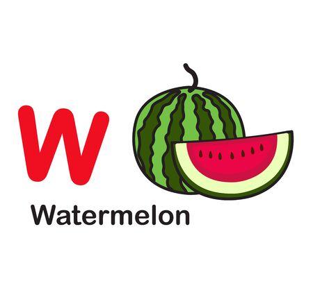 Alphabet Letter W-Watermelon vector illustration