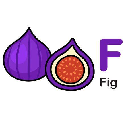 Alphabet Letter F-Fig vector illustration  イラスト・ベクター素材