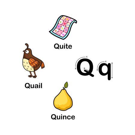 Alphabet Letter Q-quail,quince,quite vector illustration Illustration
